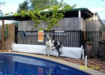 dog-friendly-pool-area