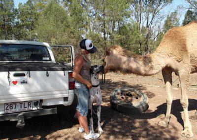 camels-dude-pet-friendly