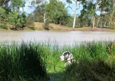 dude-pet-friendly-tara-lagoon