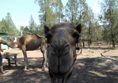 tara-camel-races